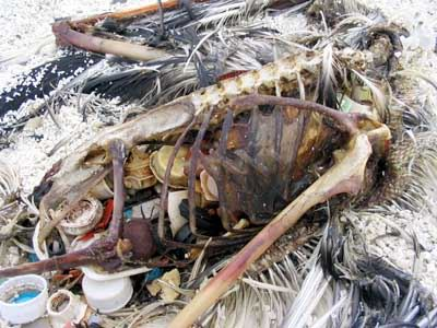 Bird skeleton filled with trash